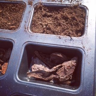 hvordan dyrkes mikrogrøn tips og tricks